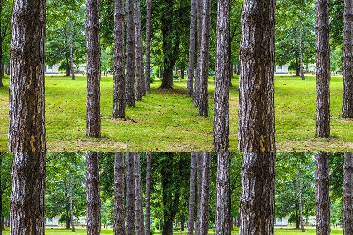 Tapeta Pixerstick Linie stromů - Stromy