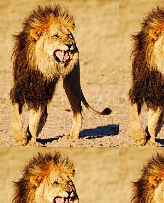 Tapeta Pixerstick Lion ukazující Flehmen odpověď - Témata