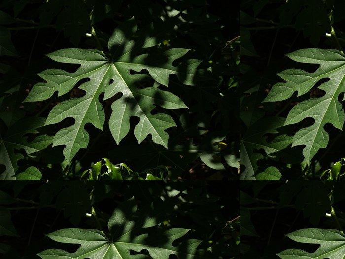 Tapeta Pixerstick List rostliny - Rostliny