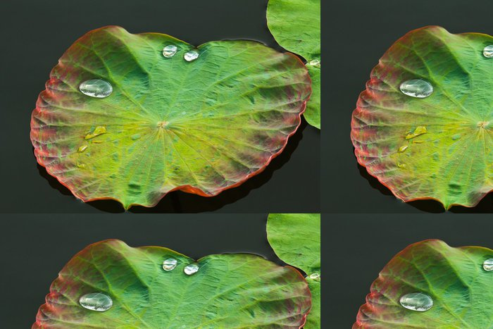 Vinylová Tapeta List s kapkami vody - Květiny