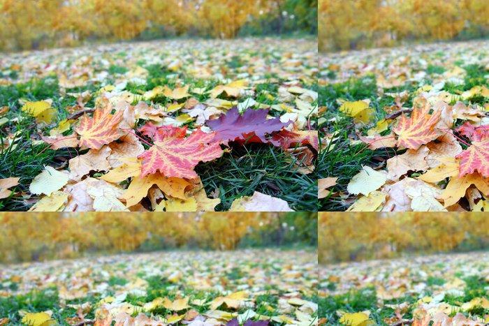 Tapeta Pixerstick Listí na trávě v parku na podzim - Roční období