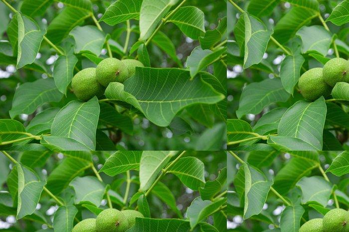 Vinylová Tapeta Listoví a ovoce ořech - Stromy