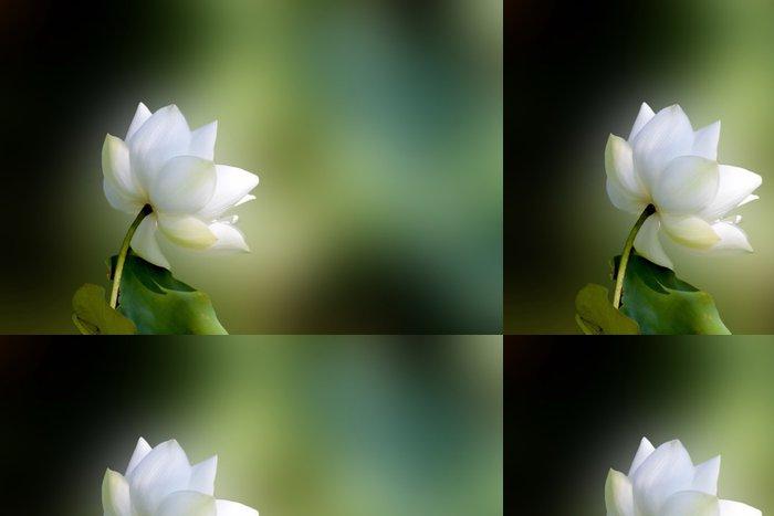 Tapeta Pixerstick Lotos - Květiny