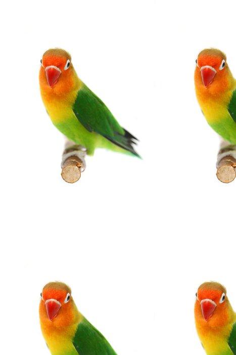 Tapeta Pixerstick Lovebird Agapornis fischeri (Agapornis Fischerův) - Nálepka na stěny