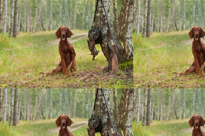 Tapeta Pixerstick Lovecký pes v blízkosti brokovnici a trofej, venku - Savci