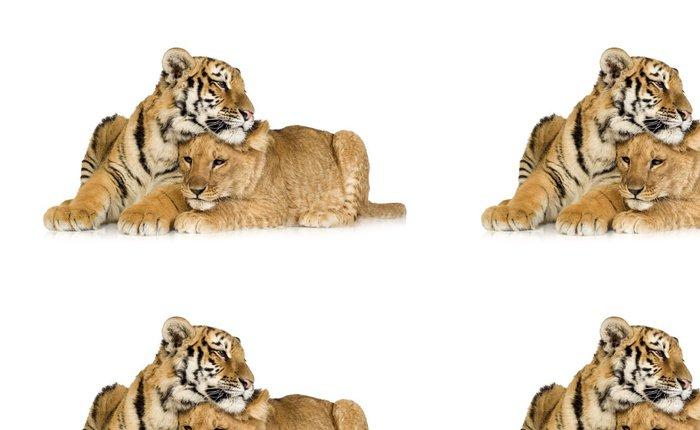 Tapeta Pixerstick Lvíče (5 měsíců) a tygří mládě (5 měsíců) - Nálepka na stěny