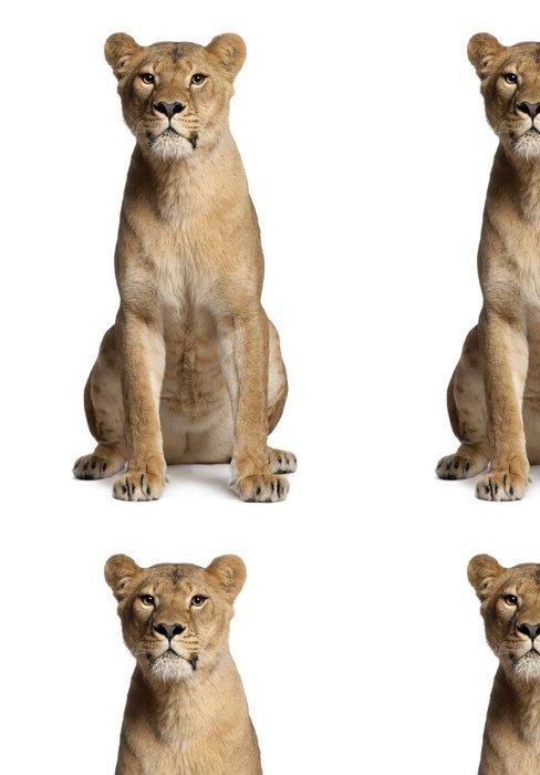 Tapeta Pixerstick Lvice, Panthera leo, 3 roky starý, sedící - Savci