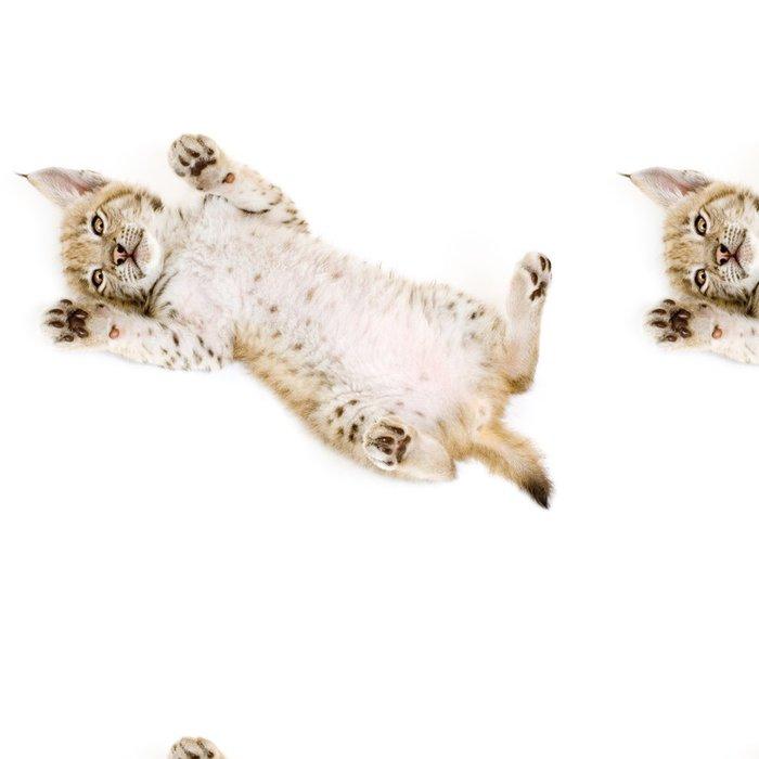 Tapeta Pixerstick Lynx mládě na zádech v přední části bílém pozadí - Savci