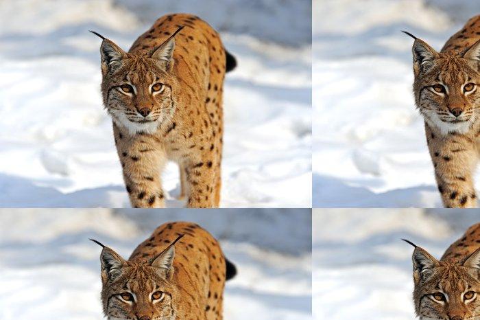Tapeta Pixerstick Lynx v jejich - Savci