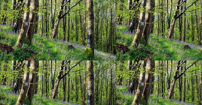 Tapeta Pixerstick Magické Bluebell Woods - Evropa