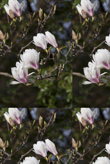 Vinylová Tapeta Magnolia květiny - Květiny