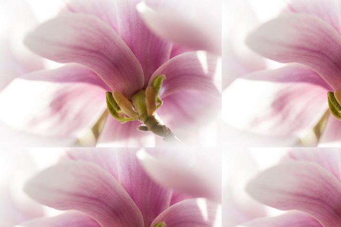Tapeta Pixerstick Magnolie - Roční období