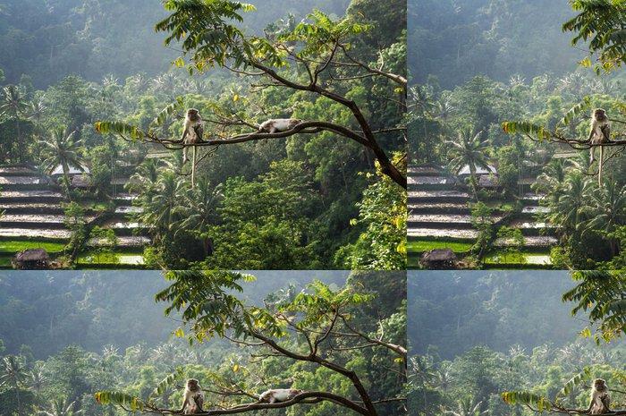 Tapeta Pixerstick Makak (Macaca fascicularis) v pralese sedí na stromě ve velikostech S - Džungle