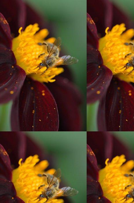 Tapeta Pixerstick Makro d'abeille butinant un dahlia - Ostatní Ostatní