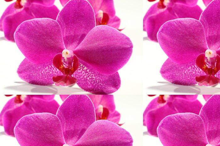 Tapeta Pixerstick Makro fotografii květy orchidejí - Přírodní krásy
