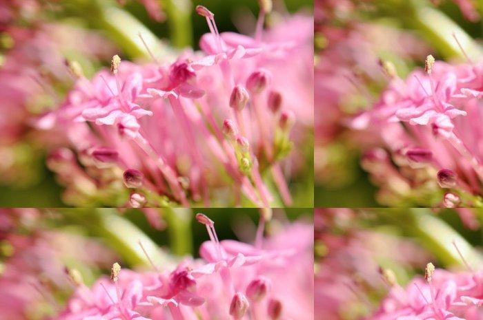 Vinylová Tapeta Makro květy divoké lila - Roční období