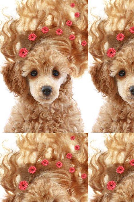 Tapeta Pixerstick Malé aprikot štěně s dlouhými vlasy - Móda