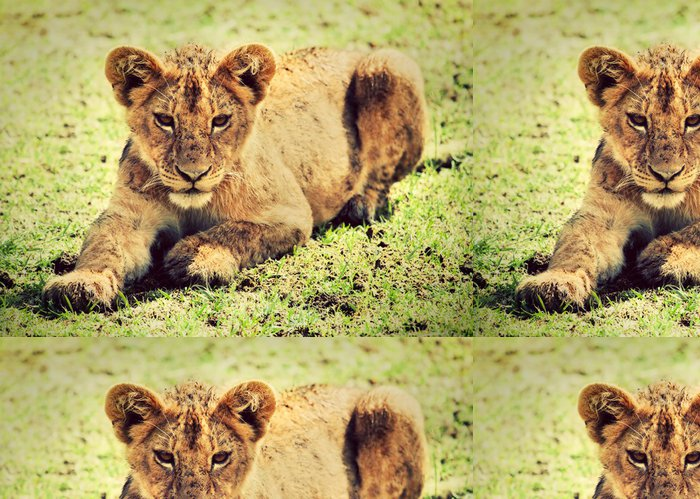 Tapeta Pixerstick Malé lvíče portrét. Kráter Ngorongoro, Afrika - Témata