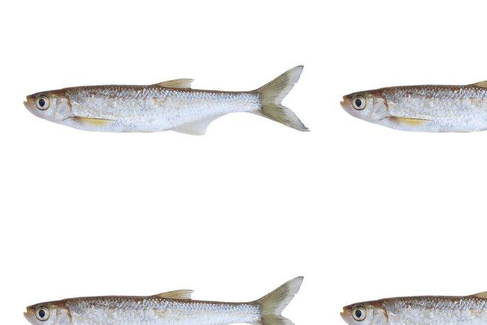 Tapeta Pixerstick Malý sladkovodní ryby - Nálepka na stěny