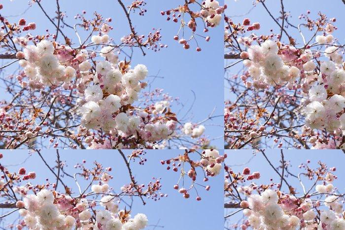 Tapeta Pixerstick Mandlové květy - Stromy