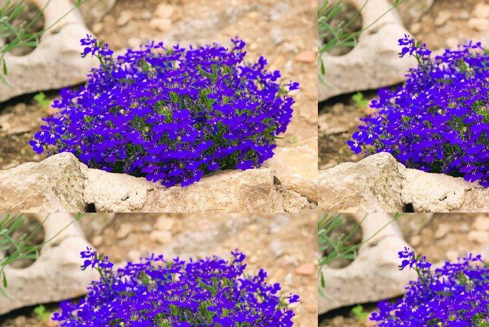 Tapeta Pixerstick Männertreu - Zahrada Lobelia 03 - Květiny