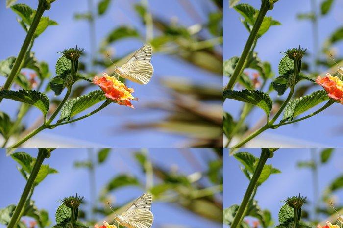 Tapeta Pixerstick Mariposa en flor - Ostatní Ostatní