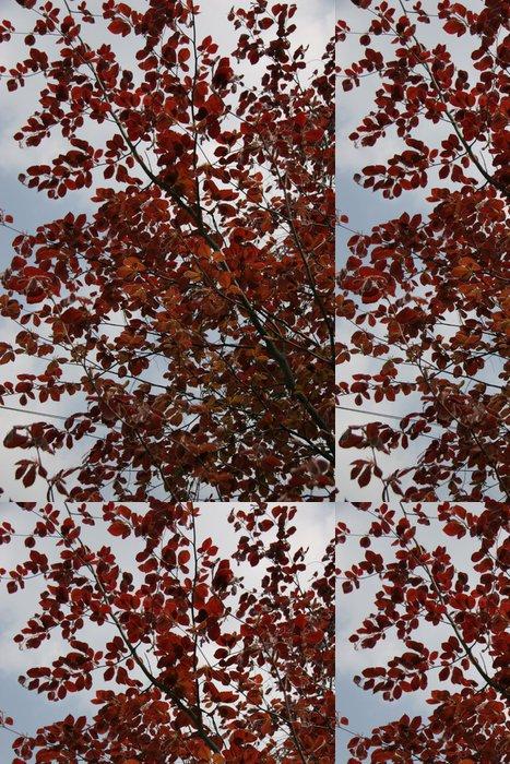 Vinylová Tapeta Měď buk na jaře - Stromy