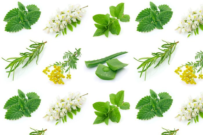 Tapeta Pixerstick Medicinal herbs - Rostliny
