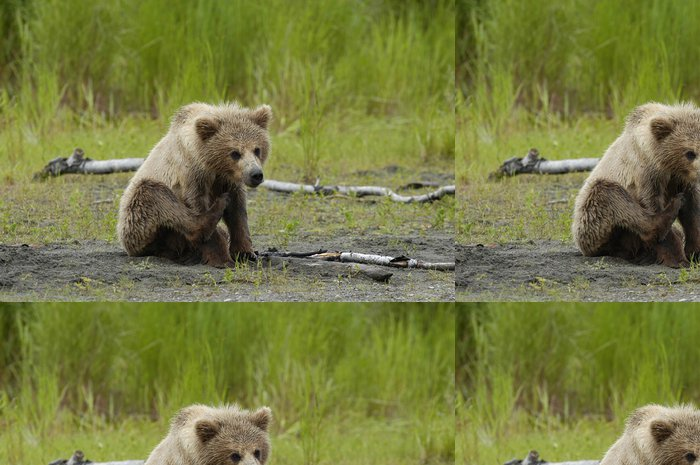 Tapeta Pixerstick Medvěd hnědý mládě poškrábání jeho hlavu - Témata
