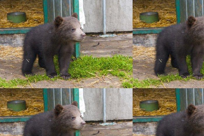 Tapeta Pixerstick Medvěd hnědý (Ursus arctos) dítě - Témata