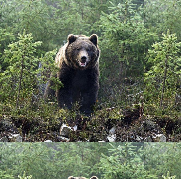 Tapeta Pixerstick Medvěd hnědý - Témata