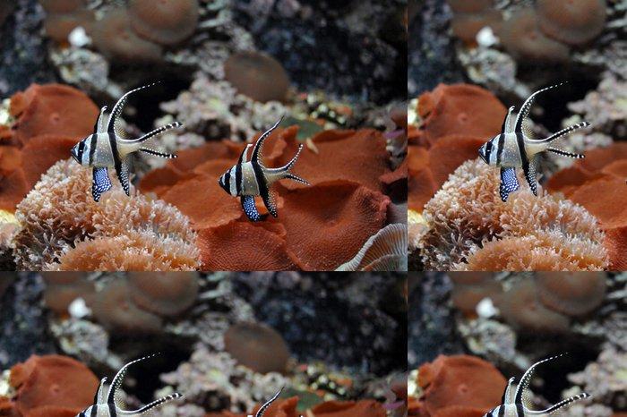 Tapeta Pixerstick Meereswelt - Podvodní svět