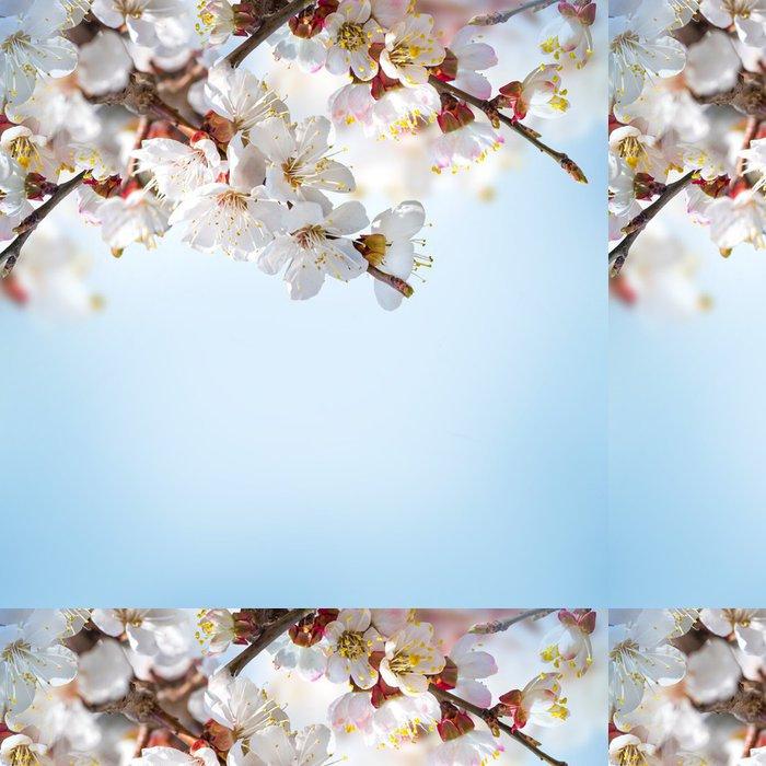 Tapeta Pixerstick Meruňkové květy na jaře, květinové pozadí - Květiny