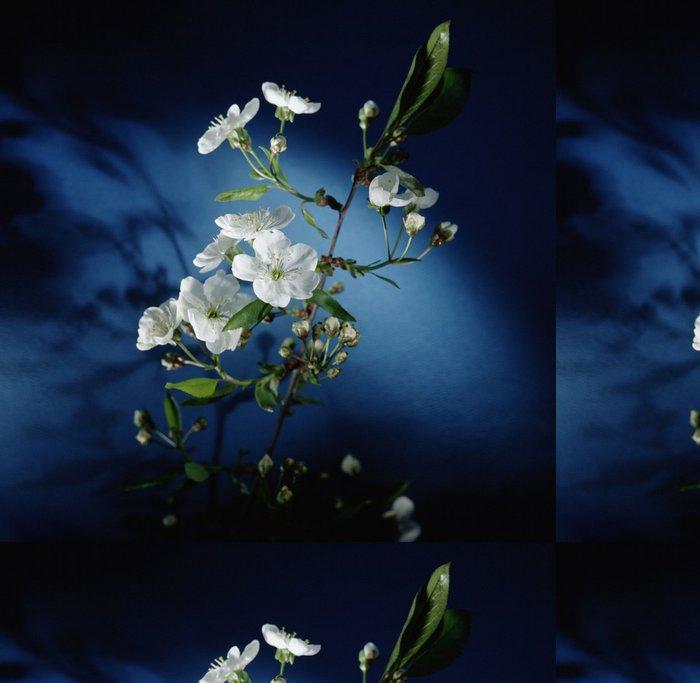 Tapeta Pixerstick Meruňkových květů - Květiny