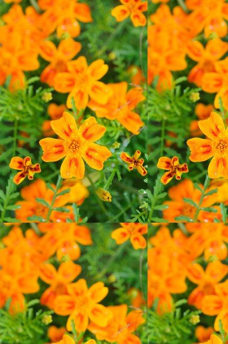 Tapeta Pixerstick Měsíček lékařský (Tagetes) Květiny kapkami rosy na záhon - Květiny