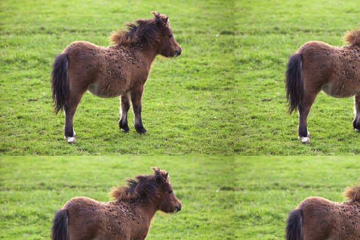Tapeta Pixerstick Miniaturní kůň hříbě shetlandský pony - Savci