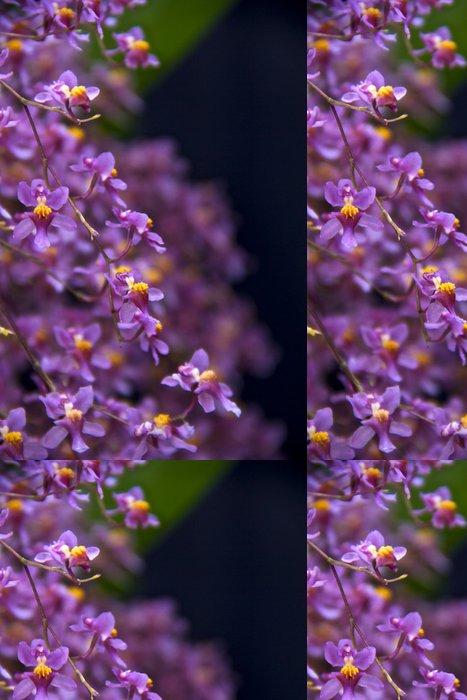 Vinylová Tapeta Miniaturní Oncidium Orchid Twinkle Branch - Květiny
