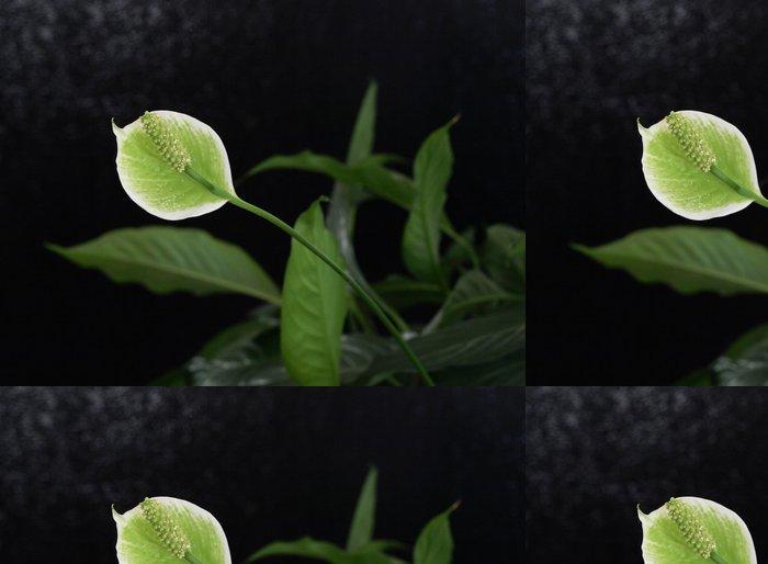 Tapeta Pixerstick Mír lilie - Květiny