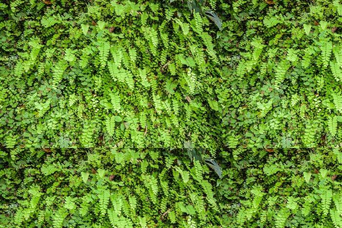 Tapeta Pixerstick Mladý Fern Leaf. - Struktury