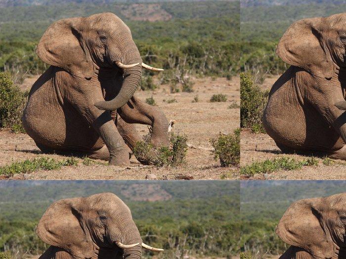 Tapeta Pixerstick Mladý slon hraní a posezení. - Témata