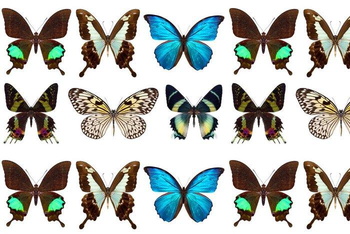 Tapeta Pixerstick Mnoho různých motýlů - Svoboda