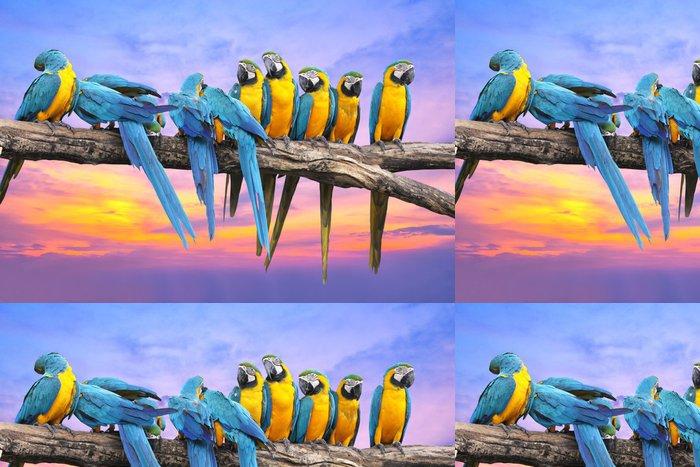 Tapeta Pixerstick Modrá a žlutá papoušek s krásnou oblohu při západu slunce - Témata