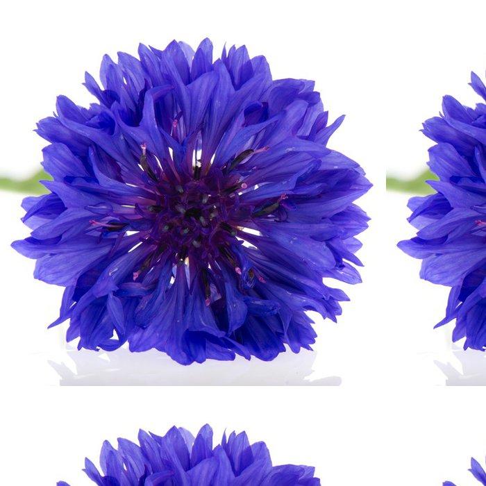 Tapeta Pixerstick Modrá chrpa - Květiny