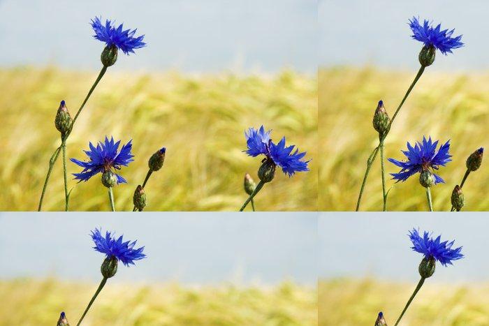 Tapeta Pixerstick Modré chrpy - Chrpy