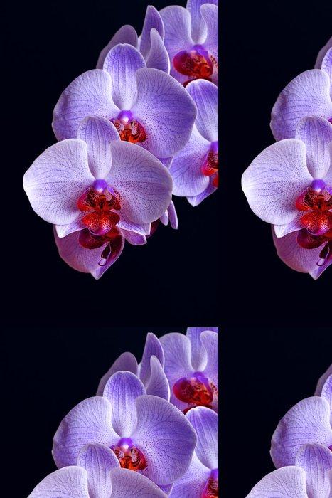 Vinylová Tapeta Modré květy orchidejí na černém - Květiny