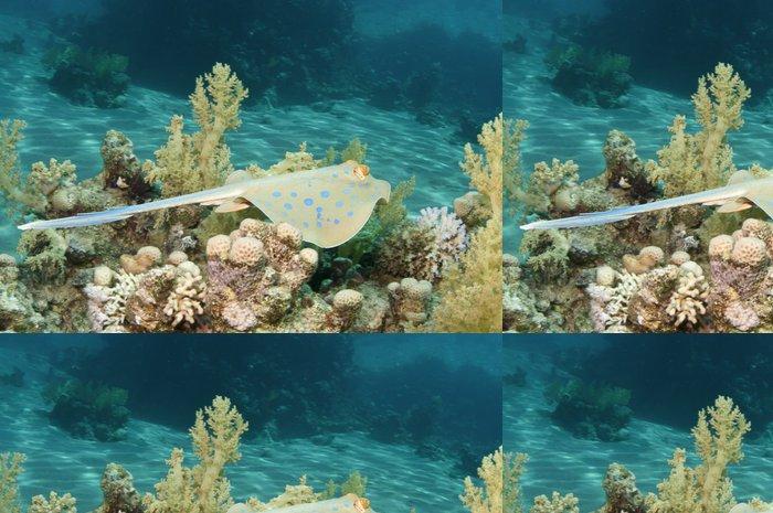 Tapeta Pixerstick Modré stuhy ocas ray - Vodní a mořský život
