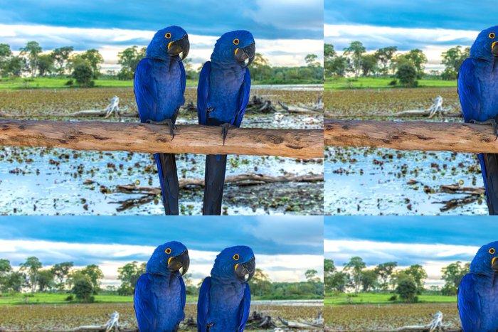 Tapeta Pixerstick Modrý papoušek v Pantanal, Brazílie - Brazílie