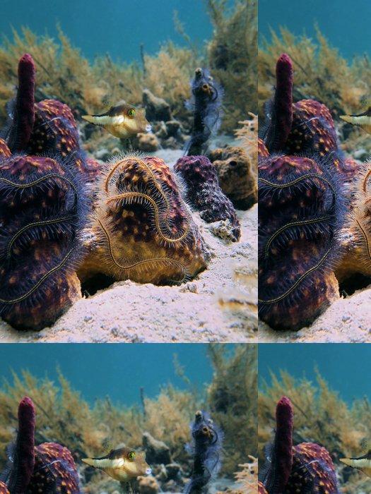 Tapeta Pixerstick Mořské houby a ostrý nos pufferfish - Podvodní svět