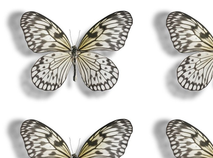 Tapeta Pixerstick Motýl izolovaných na bílém - Ostatní Ostatní