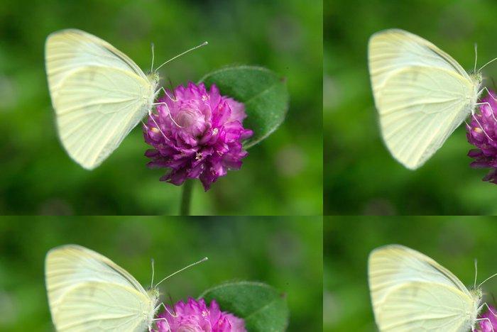 Vinylová Tapeta Motýl na fialový květ - Témata